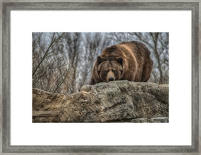 Brown Bear Framed Print