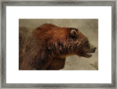 Brown Bear Hunting Framed Print by Dan Sproul