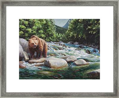 Brown Bear On The Little Susitna River Framed Print