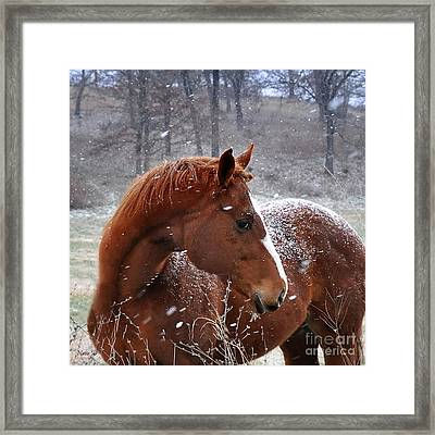 Snowing  Framed Print