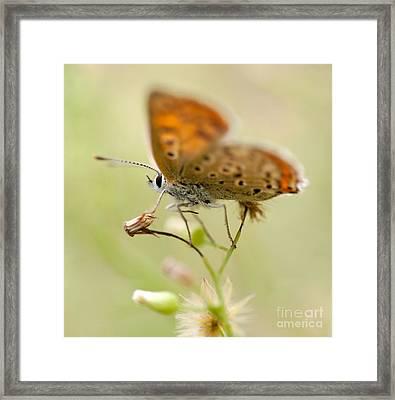 Brown Blurry Butterfly  Framed Print by Jaroslaw Blaminsky
