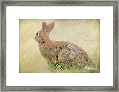 Brown Bunny Framed Print by Tom York Images