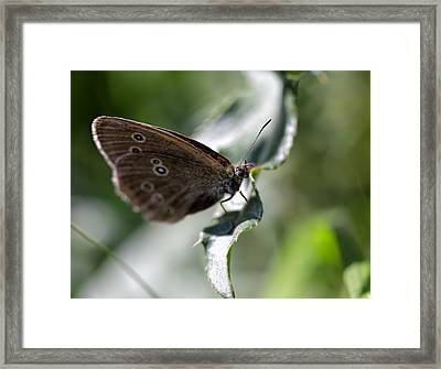 Framed Print featuring the photograph Brown Butterfly On Leaf by Leif Sohlman