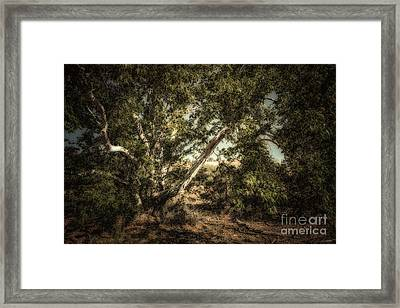 Brown Canyon Sycamore - Toned Framed Print by Al Andersen