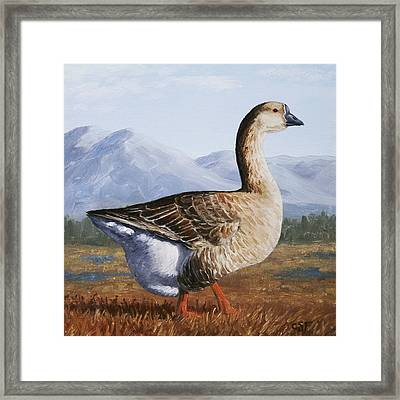 Brown Chinese Goose Framed Print by Crista Forest
