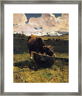 Brown Cow At Trough  Framed Print