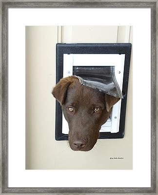 Brown Dog Framed Print by Gary Emilio Cavalieri