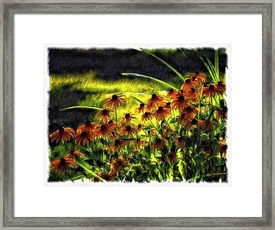 Brown Eyed Girls Framed Print by Steve Harrington