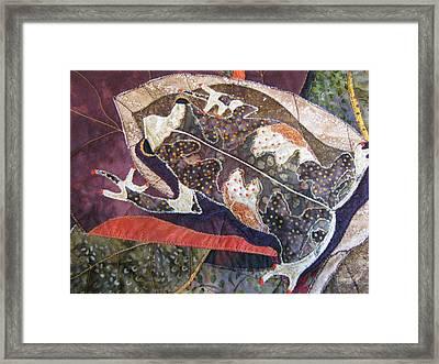 Brown Forest Toad Framed Print by Lynda K Boardman