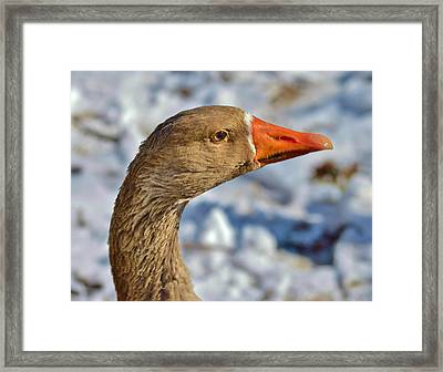 Brown Goose Framed Print by Thomas  MacPherson Jr