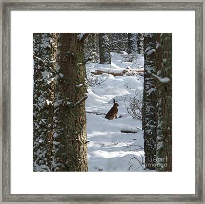 Brown Hare - Snow Wood Framed Print by Phil Banks