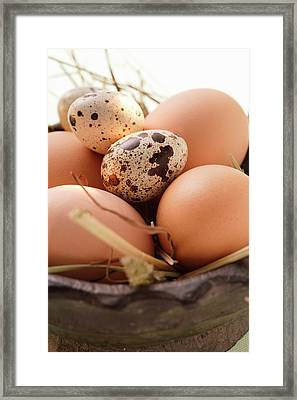 Brown Hen?s Eggs And Quail?s Eggs In Wooden Bowl With Straw Framed Print