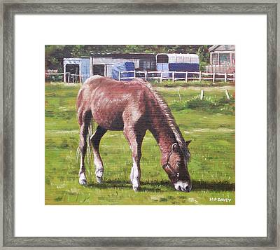 Brown Horse By Stables Framed Print by Martin Davey