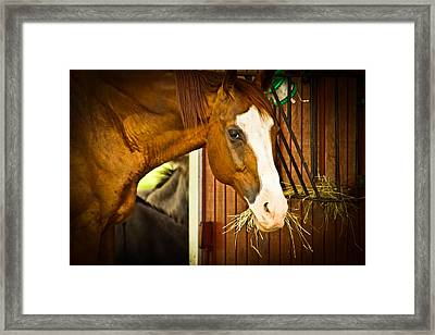 Framed Print featuring the photograph Brown Horse by Joann Copeland-Paul