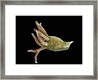 Brown Hydra Framed Print by Alex Hyde