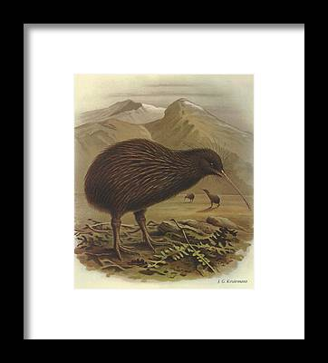 Kiwi Bird Framed Prints