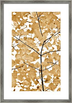 Brown Leaves Melody Framed Print by Jennie Marie Schell