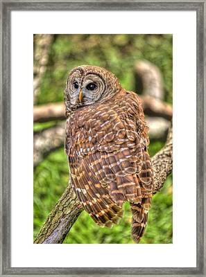 Brown Owl Framed Print