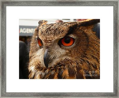 Framed Print featuring the photograph Brown Owl by Vicki Spindler