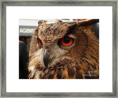 Brown Owl Framed Print by Vicki Spindler
