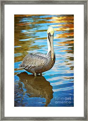 Brown Pelican Along The Bayou Framed Print by Joan McCool