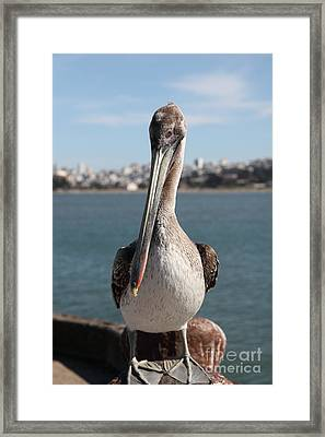 Brown Pelican At The Torpedo Wharf Fising Pier Overlooking The City Of San Francisco 5d21685 Framed Print by Wingsdomain Art and Photography