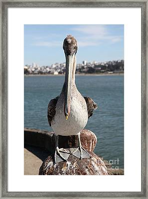 Brown Pelican At The Torpedo Wharf Fising Pier Overlooking The City Of San Francisco 5d21689 Framed Print by Wingsdomain Art and Photography