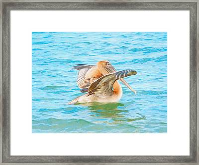 Brown Pelican Framed Print by Cindy Croal