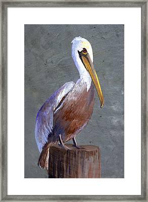 Brown Pelican Framed Print by Elaine Hodges