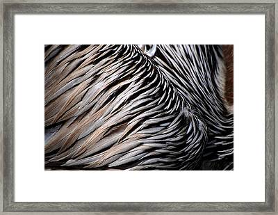Framed Print featuring the photograph Brown Pelican Feathers by Lorenzo Cassina