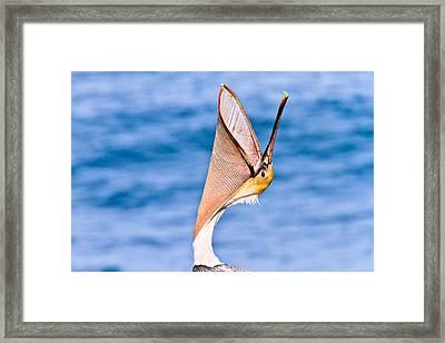 Brown Pelican - Head Throw Framed Print