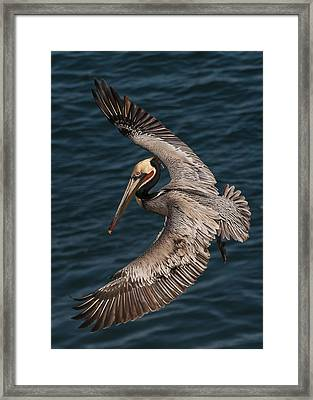 Brown Pelican Landing 2 Framed Print