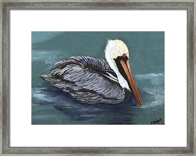 Brown Pelican On Water Framed Print by Elaine Hodges