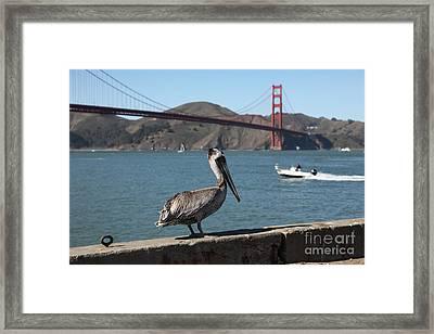 Brown Pelican Overlooking The San Francisco Golden Gate Bridge 5d21670 Framed Print