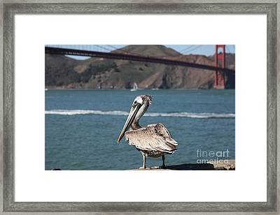 Brown Pelican Overlooking The San Francisco Golden Gate Bridge 5d21672 Framed Print by Wingsdomain Art and Photography