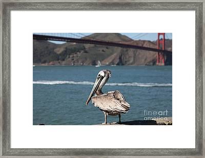 Brown Pelican Overlooking The San Francisco Golden Gate Bridge 5d21672 Framed Print