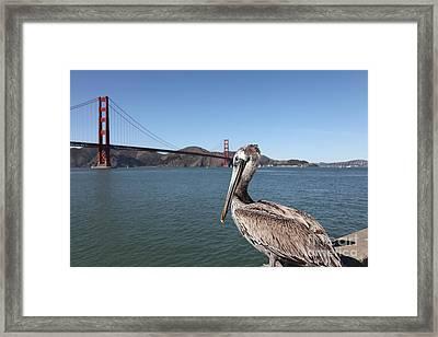 Brown Pelican Overlooking The San Francisco Golden Gate Bridge 5d21683 Framed Print