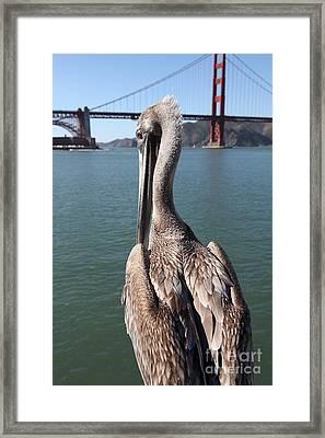 Brown Pelican Overlooking The San Francisco Golden Gate Bridge 5d21700 Framed Print
