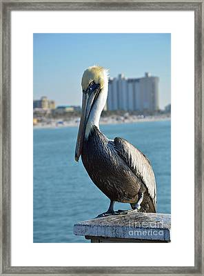 Framed Print featuring the photograph Brown Pelican by Robert Meanor