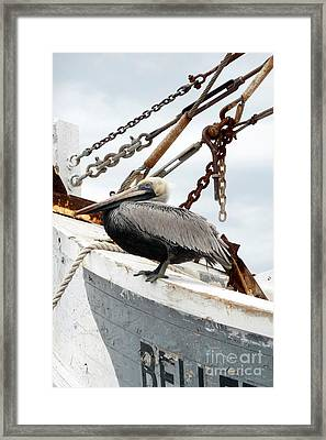 Framed Print featuring the photograph Brown Pelican by Valerie Reeves