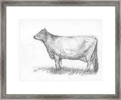 Brown Swiss Dairy Cow Framed Print by J E Vincent