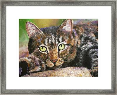 Brown Tabby Relaxing Framed Print