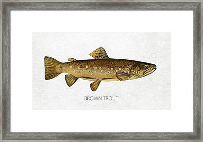 Brown Trout Framed Print by Aged Pixel