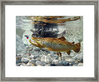 Brown Trout And Supervisor  Framed Print