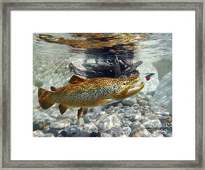 Brown Trout And Wet Fly Framed Print