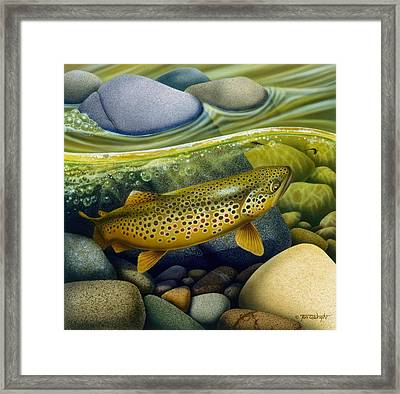 Brown Trout Framed Print by Jon Q Wright