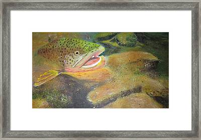 Brown Trout   Framed Print by Ordy Duker