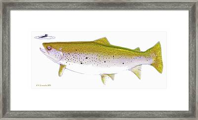 Brown Trout Rises To The Fly Digital Art Framed Print by A Gurmankin
