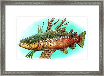 Brown Trout Framed Print by Roger Hall
