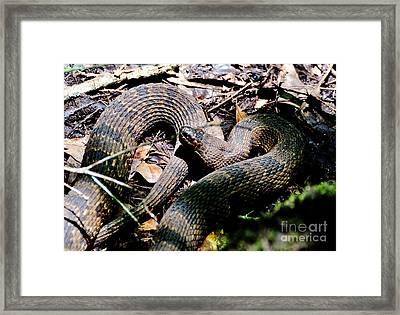 Brown Water Snake Framed Print by Kathy Baccari